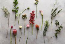 Love | Blooms
