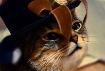 Steampunk cats