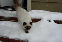 Ragdoll Kittens In The Snow - ねこ - ラグドール