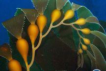 Amazing Sea Plants / by MossyBrae Fairies
