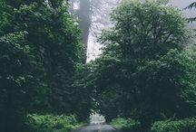 Adventure / by Cynthia McNaughton