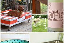 Dogs DIY