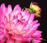 Flowers / by Debra McRae