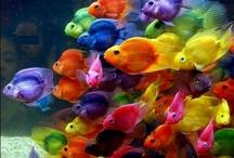 虹 / 七色に生きて