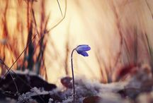 Beautiful: Peaceful Solitude and Serenity / by Deniport