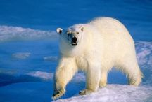 #Arctic Oil Rush Concerns Over Environment