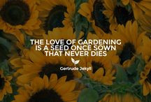 Gardening Quotes / Inspire and brighten up your day with these gardening quotes
