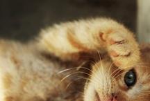 Miau Miau / by Marianna Di Ferdinando