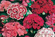Wilko | Summer Flowers and Plants / The RHS Chelsea Flower Show is right around the corner so why not prep your garden to look blooming lovely for the summer