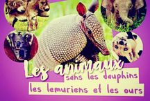 LES ANIMAUX. (my collect') / ©LauryRow. / VOIR AUSSI ICI :: https://www.facebook.com/pg/Disneycollecbell%20/photos/?tab=album&album_id=604624556285905
