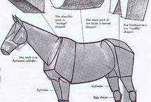 Anatomy_Animal