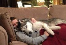 My lovely husky