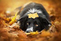 Alicja Zmysłowska photography / amazing dogs' photos