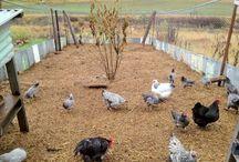 Southridge Farms / by Ashley Harbin