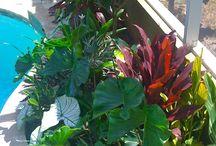 Poolside Garden Ideas