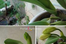 Mis orquídeas