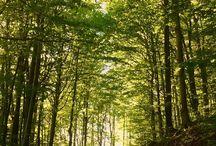hory lesy