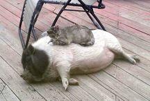 Other cutieeee animals!!