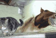 animals videos