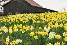 Spring Fever / by Betsy Ellis