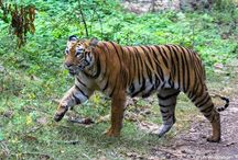 Tourists Attraction in Tadoba / Tourists Attraction in Tadoba