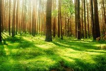 숲에서 / 숲은 한 그루에서 시작된ㄷㅏ