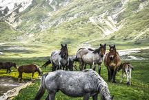 Photography · Horses