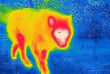 """Thermal """"Color"""""""