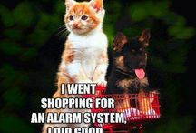 Security Alarm System Laughs / Security is not something we should laugh at but these are funny!  If you have any questions or concerns please feel free to contact us at 604-876-5000