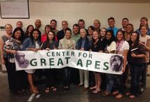 Human Faces of CGA / This board shows you the many people that are behind the success of the Center. From the founder to staff to volunteers to members/donors, everyone shares an important role in caring for our 45 ape residents!