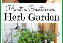 Taimede kasvatamine