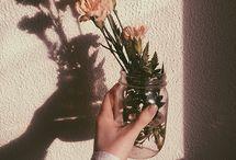 flowers, my true love