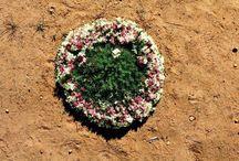 wreath flowers   west australia