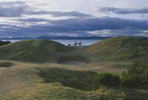The Golden Rose of Scotland / Inspiration Board