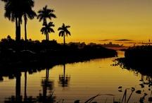 Everglades / by Jessie Rubenstein