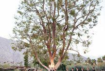 Smoke Tree Ranch Weddings / Here are just a few beautiful weddings we helped coordinate.