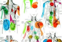 trigger point therapy / Trigger points & masage