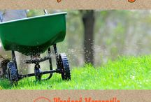 Lawn Care / Ideas and information for maintaining your healthy lawn.