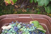 CSA recipes - Concord & Niagara grapes