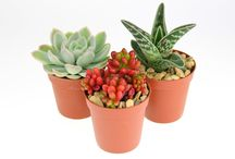 Indoor Plant Selection Boxes