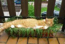 #Katzengras-Bett