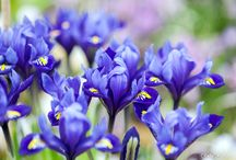 Photos of plants by Fefa Koroleva / Photos of plants