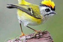 bird oh! bird!