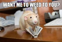 """Martin """"Marty"""" Mouse / Yes, he is a rat, not a mouse. Marty is a simple rat living the high life and is often plagued by humorous captions."""
