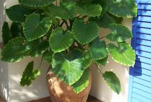 PLANT & PoT COMBINATIoN