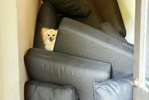 Dogs Love Pillow Forts