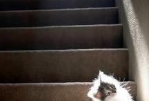 kitty / aaaawwwwwwww   sooooooooo cuteeeeeee.........