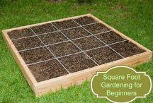 Organic Garden / Compost Love