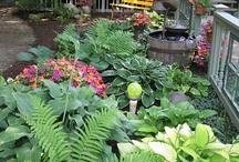 Shade plants / Shade garden with fountain