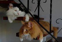 Kočky světa / kočkovin